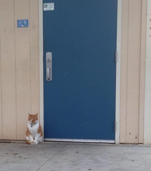 這個學校逼不得已需要發一張「正式學生證」給這隻貓咪,原因讓人真的哭笑不得...