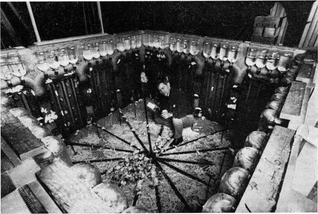 超黑暗實驗把老鼠關在應有盡有的「天堂」裡模擬人類社會,他們發展出的形態跟人類社會一樣,最後走向滅亡!