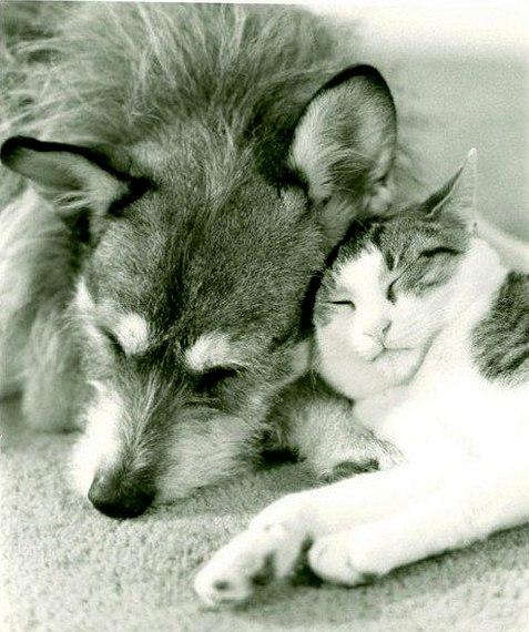 這隻狗狗在熬過悲苦的身世後,窮盡一生拯救900隻貓的動人故事都被出書歌頌了!