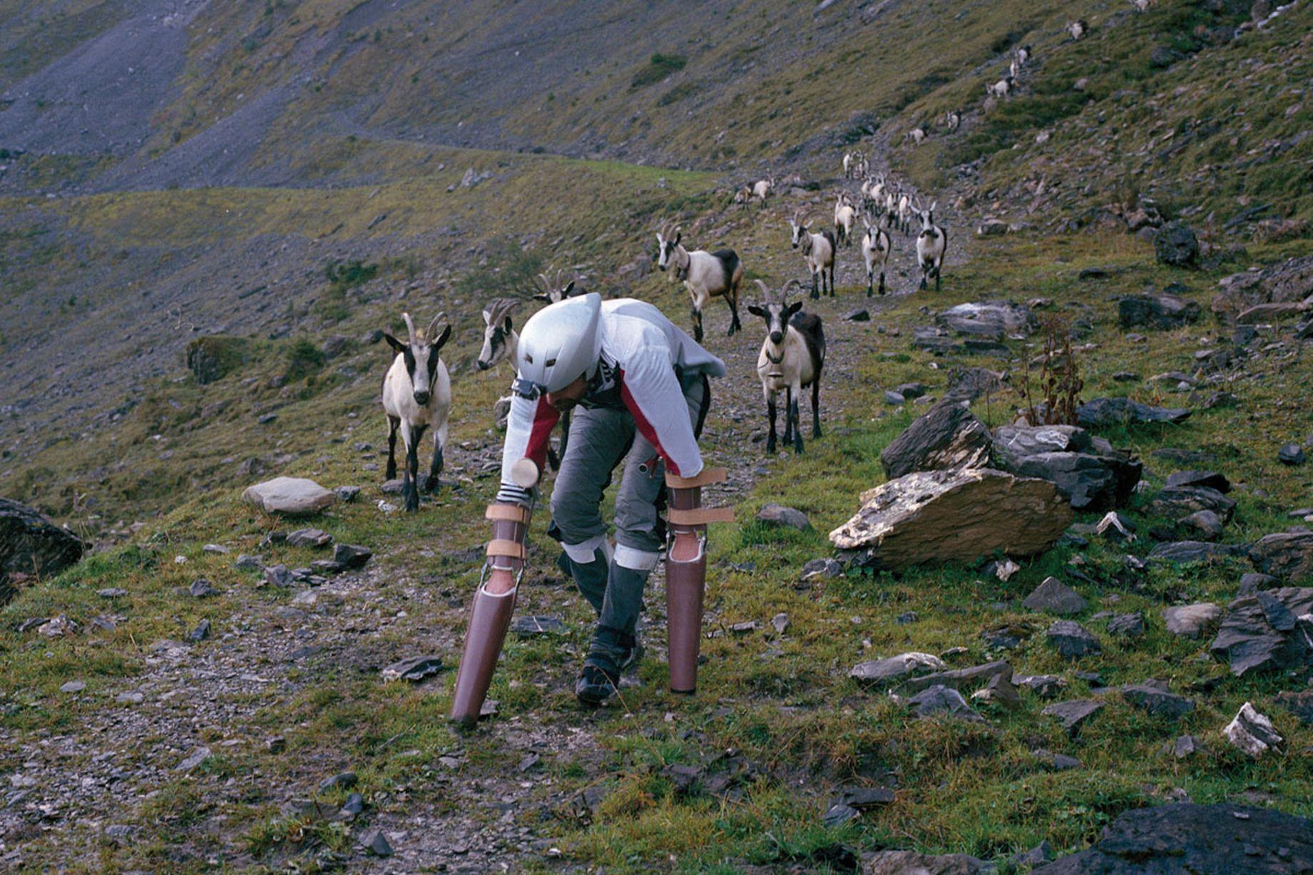 這個男子當人類當累了想要找尋一個更單純的人生,因此他就把自己變成了一隻山羊!