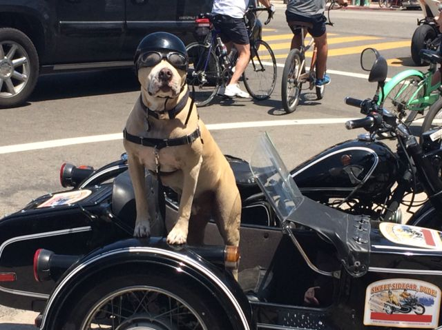 The struggle to stay looking cool even though you have to sit in the sidecar.
