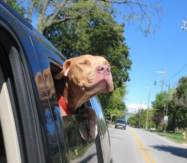 adopted-dogs-10