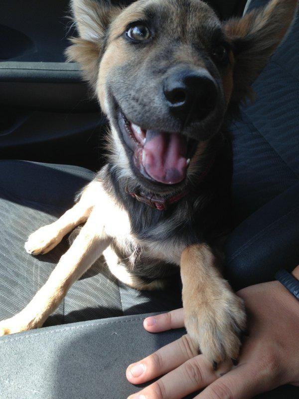 adopted-dogs-4
