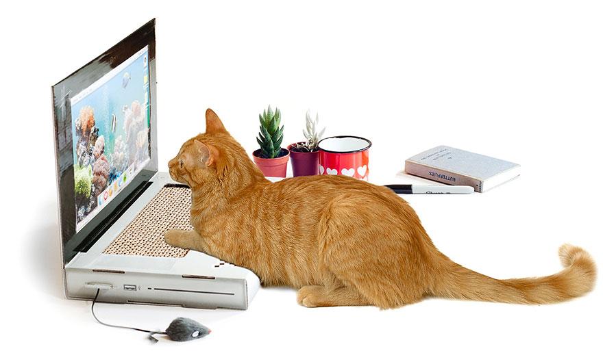 cat-scratch-laptop-toy-suckuk-4