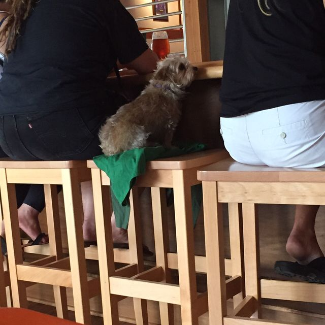 The struggle of being too short to get the bartender's attention.