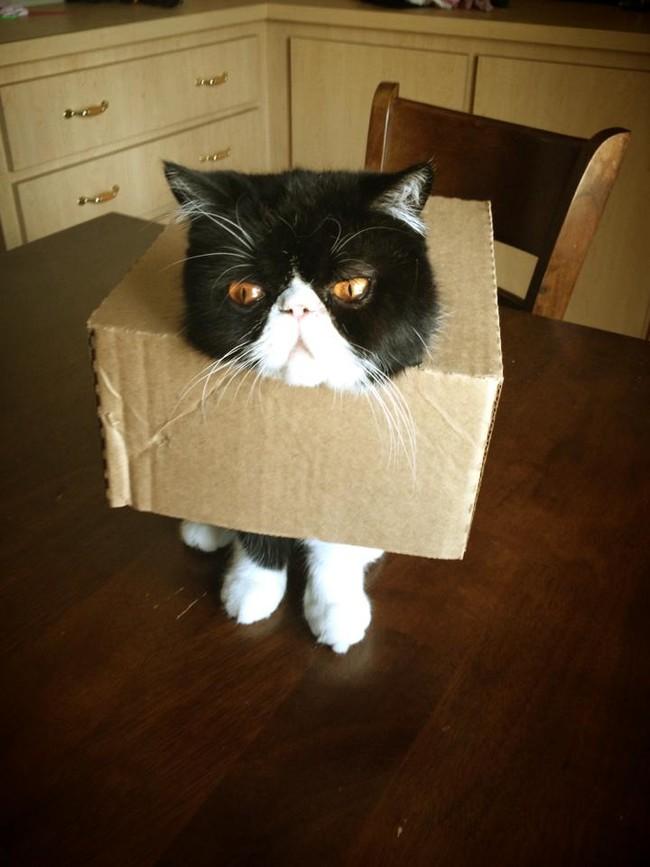 25隻「糗到會讓你一整天都很圓滿」的爆笑貓咪。