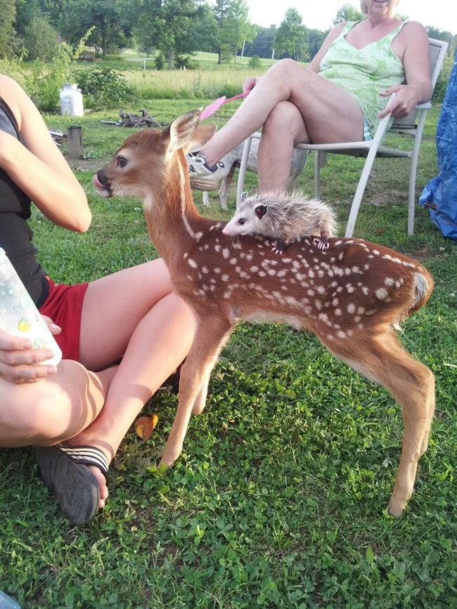 What is this, <em>Bambi</em>?
