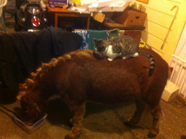 A perfect kitten-size pony.