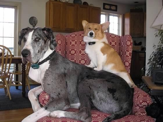 Short dog on a tall dog. Perfection.