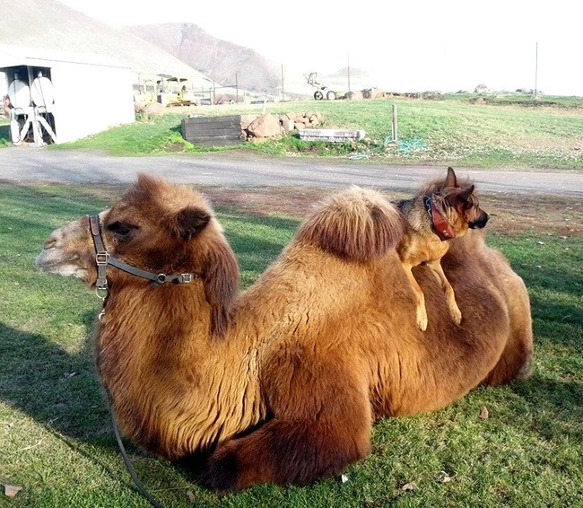 I think we've finally discovered the true use of camel humps.