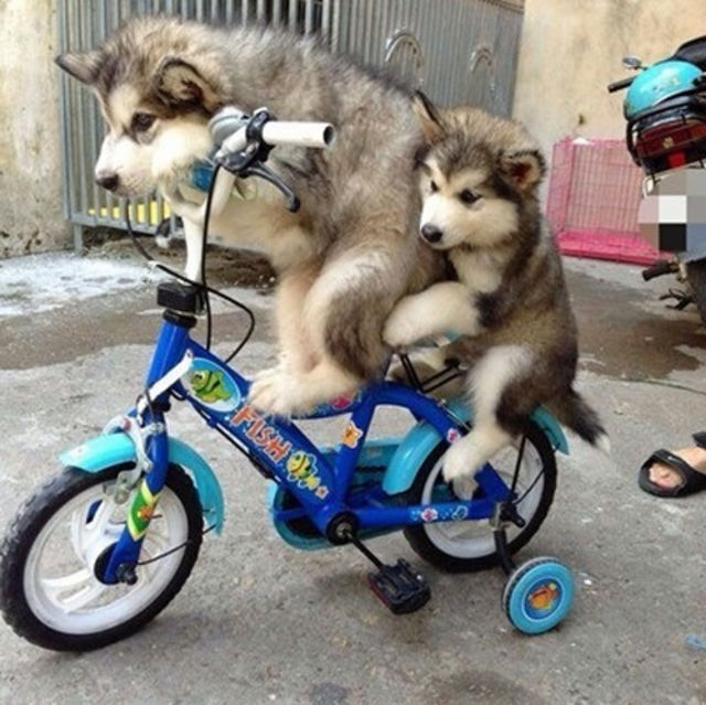 Not being able to afford two bikes as a kid, so having to ride on the back of your older sibling's bike all uncomfortable.