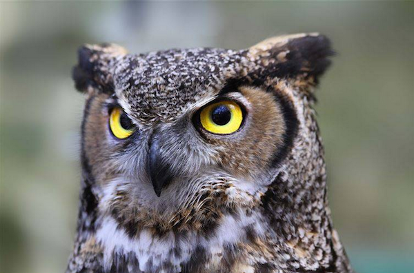 Egyptians believe Owls are unlucky inherently.