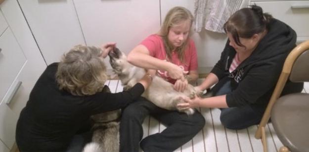 25個會讓養狗狗的人輕鬆很多的天才秘訣。