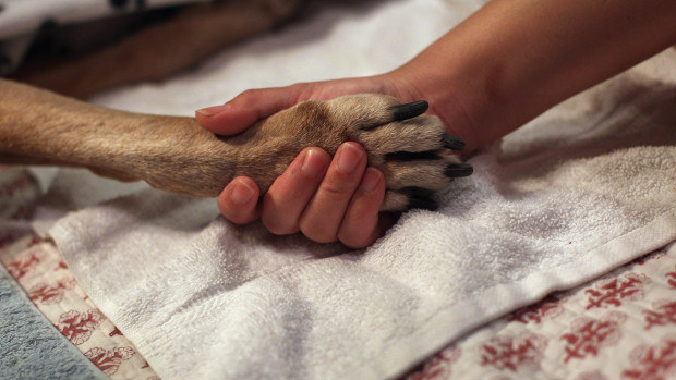 If it's really hot or really cold out, rub Vaseline onto your dog's paws before stepping outside.