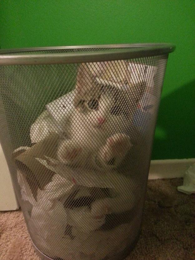 25隻其實根本就是你的貓咪!