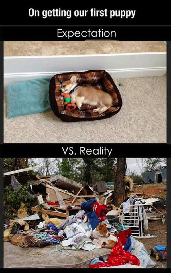 expectation versus reality 24 Expectations versus reality (30 Photos)