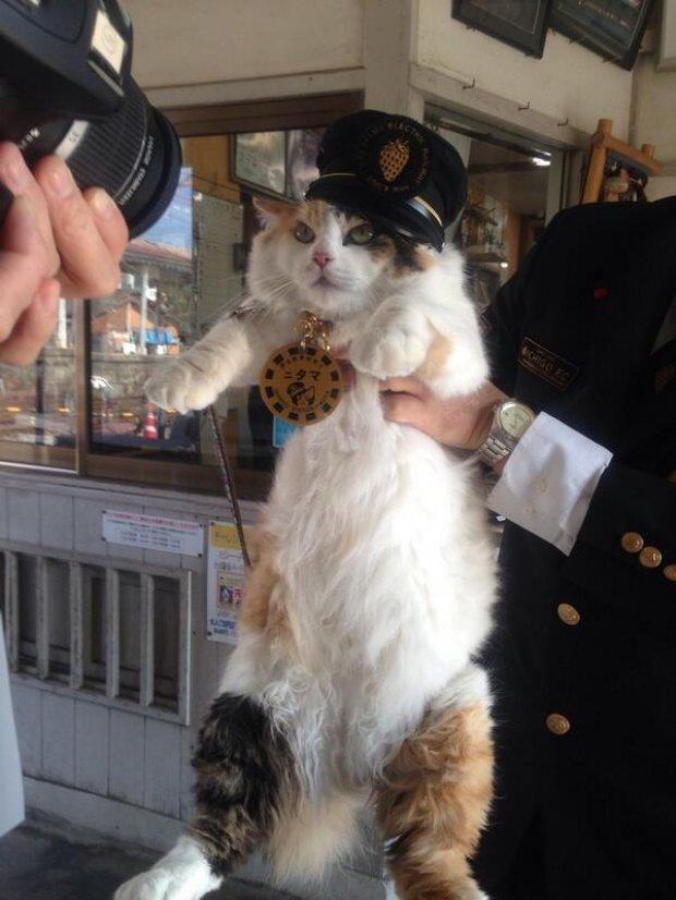 在日本為這個前「貓站長」舉行了超豪華的葬禮後,他們終於找到了大家都很滿意的接班人!