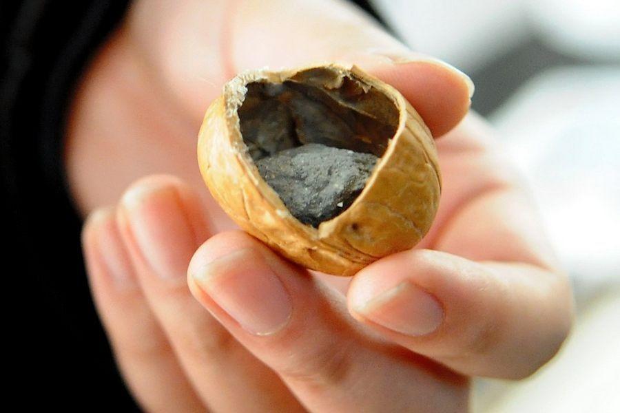fake-walnut-cement-2