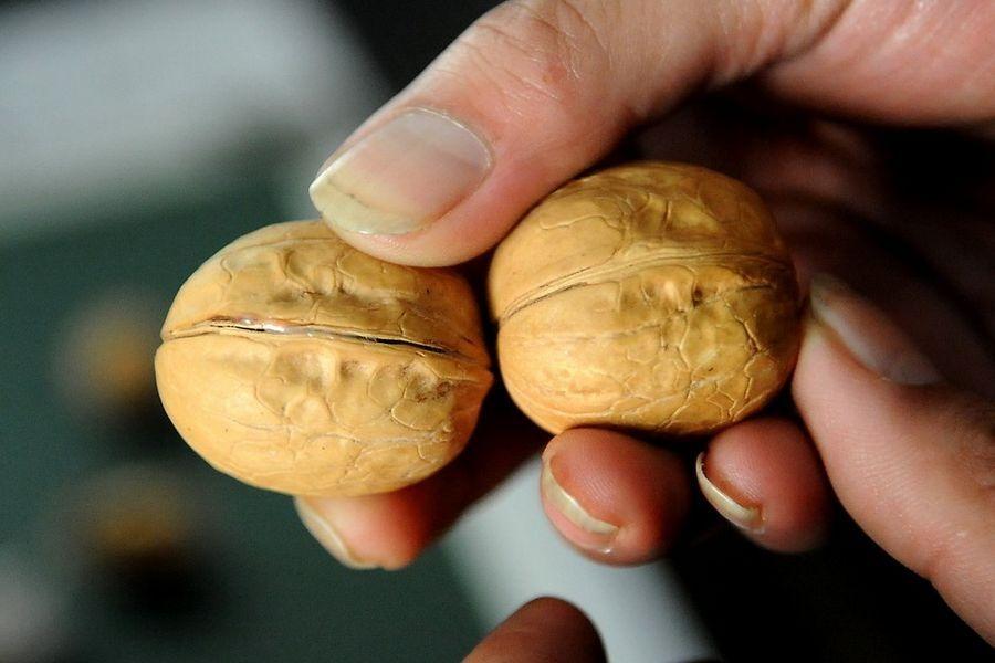 fake-walnut-cement-3