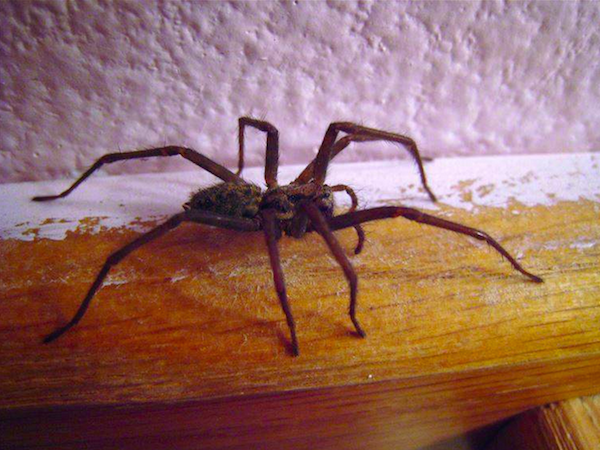 If you kill a spider in Finland you may be blamed for the weather the next day.