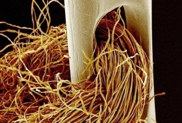 everyday objects under microscope 45