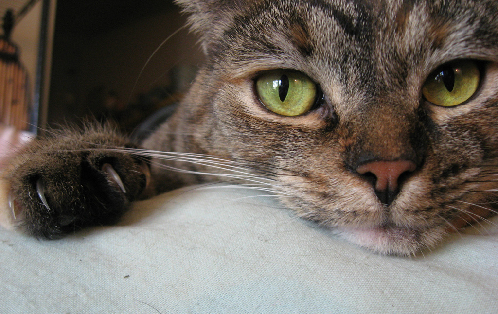 Australia has banned declawing cats unless it is for medical purposes.