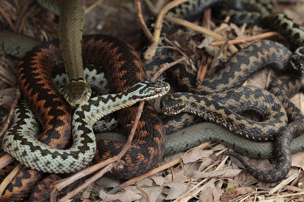 Out of the 25 deadliest snakes in the world, 20 can be found in Australia.