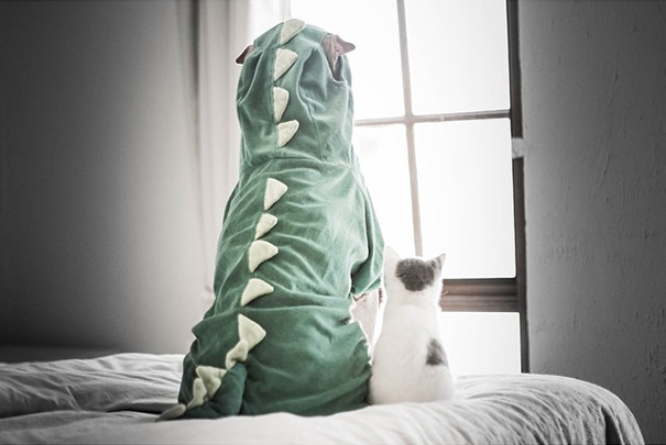 shar-pei-dog-paddington-friend-annie-cat-1