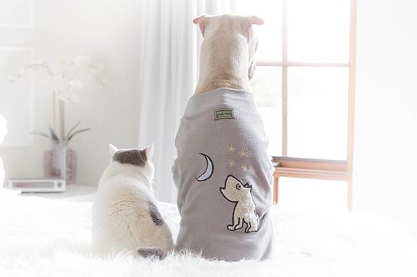 shar-pei-dog-paddington-friend-annie-cat-18