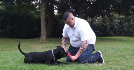這名男子寫完遺書後,正準備上吊自殺卻發現了狗狗拿走的東西!