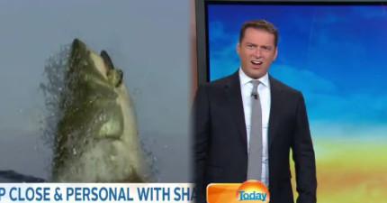 當主播看完一段超巨大白鯊跳出水面吃魚的瘋狂片段後,爆笑反應被網友立刻瘋傳!