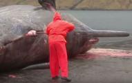 這個生物學家原本只是要把在岸上曬兩天的鯨魚屍體切開清理,但他卻不知道體內已累積太多壓力...