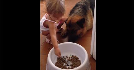 小妹妹不知道狗狗不是人類,餵他食物的模樣真的太「迪士尼」了!