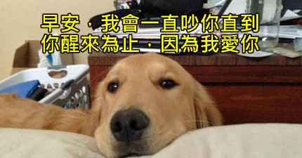 30個有養過狗狗的人一定感動到又哭又笑的狗狗爆笑舉動。