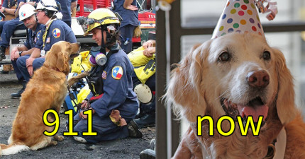 最後一隻的「911事件搜救狗英雄」現在用最可愛的方式歡慶他16歲的生日!