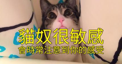 21個超中肯理由證明為什麼「貓奴絕對是你最棒的愛人」!