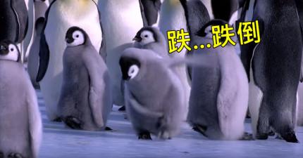 雖然這樣很壞,但看完這「企鵝跌倒大全集」會讓你今天心情好到吹口哨。