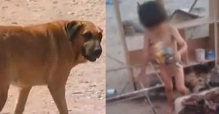 路人在街上看到這名被遺棄的2歲大小男童,發現到居然是被母狗的母奶養大的!
