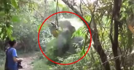 這就是如何瞬間搞定「朝你衝撞過來的大象」的超霸氣方法!