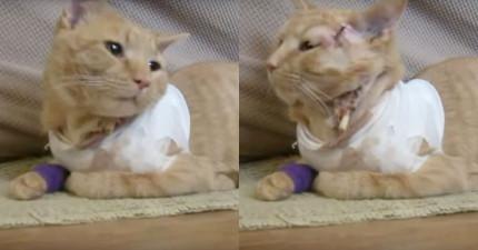 她聽見槍聲後急忙查看3歲兒子有沒有事,後來才發現倒臥血泊的貓咪救了兒子一命!