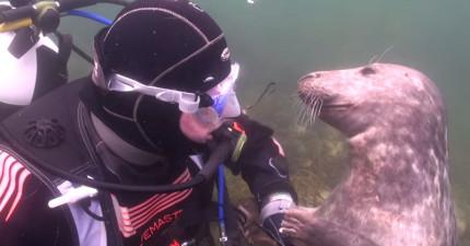 他在海中遇見這隻「想要被搔肚肚」的淘氣海豹,當開始摸摸時...怎麼跟狗狗一樣啊?!