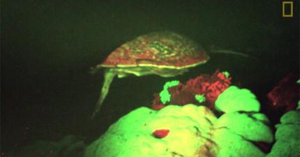 在科學家們夜間潛水時,意外拍下這個超罕見「水中發光不明物」閃過他們的視線!