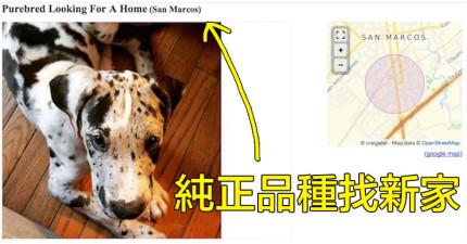 男友對她說「有狗就沒有我」,於是她貼了這篇被網友含淚推爆的「送養啟事」!