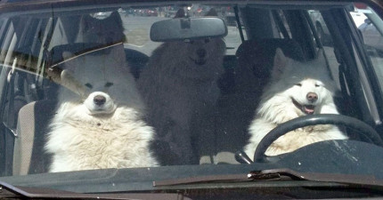 25隻「一上車整個就開始失控」的極限爆笑狗狗。