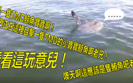 男子驚遇到世界上其中最奇怪的魚,當場整個瘋掉胡言亂語過程已經讓網友們完全笑翻了!