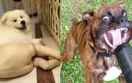 25隻不計形象就是要「逗你笑到肚子痛」的超有事狗狗。