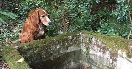 周圍的人看到這隻狗狗守著一個井7天,當他們終於看到為什麼時都恨自己沒有早發現!