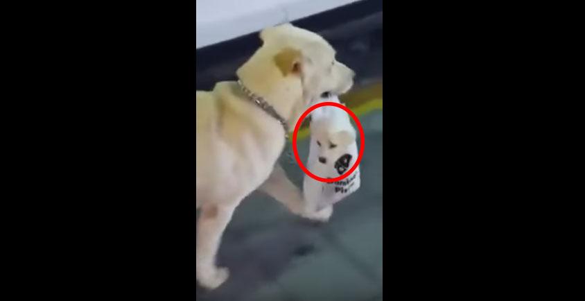 狗狗拎著狗狗
