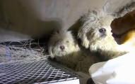 這對被遺棄在下水道的狗狗兄妹原本再也不相信人類了,但他們被救出後的反應絕對可以融化人心!