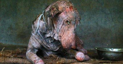 他們在路邊發現這隻奄奄一息的超可憐狗狗,細心照料2個月後最感人的奇蹟發生了!